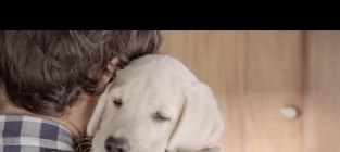Adorable inspiring budweiser commercial