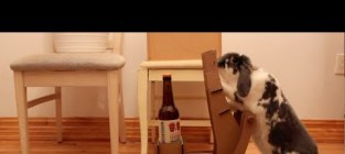Bunny pushes homemade beer cart