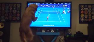 Golden retriever loves to watch tennis