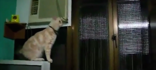 Hilarious cat fails they cant jump
