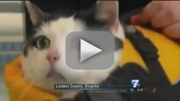 Cat Swims, News Anchor Loses It