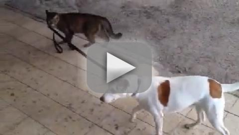 Cat Walks Dog Home