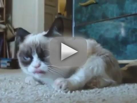Grumpy Cat in a Box