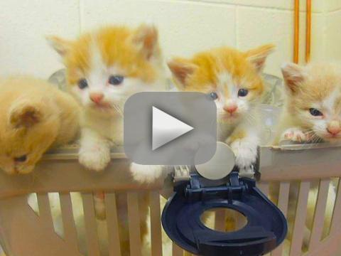 Cats Rescued From Air Conditioner