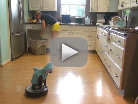 Shark Cat Rides Roomba