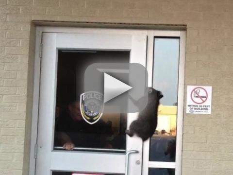Raccoon Breaks Into Police Station