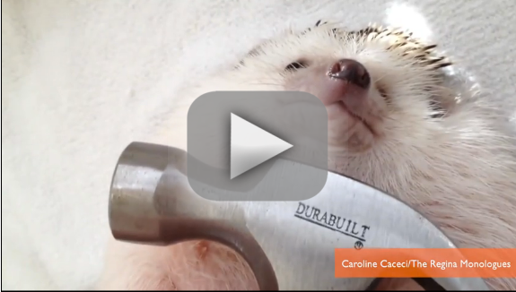 "Hedgehog Parodies ""Wrecking Ball"" Video"