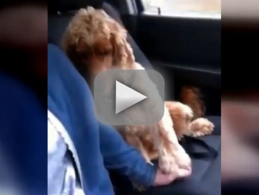 Dog Holds Owner's Hand in Car