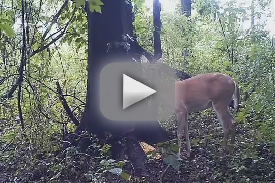 Deer Fart