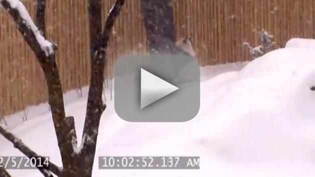 Baby Panda Loves the Snow