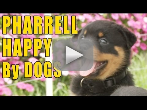 "Puppies Recreate ""Happy"""