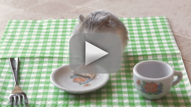 Tiny Hamster Eats Tiny Pizza