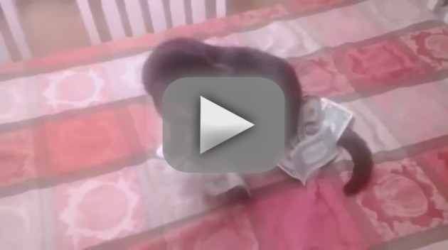 Cat Plays with Cash