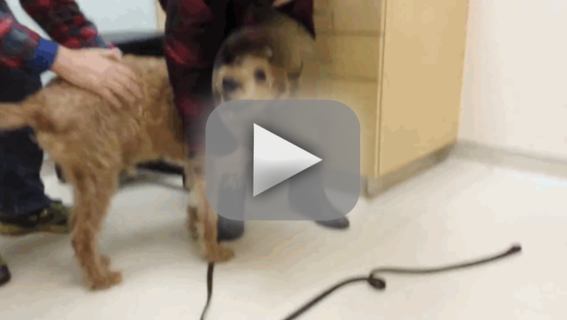 Formerly Blind Dog Sees Owners for First Time