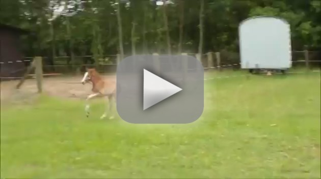 Horse Sprints Into Fellow Horse