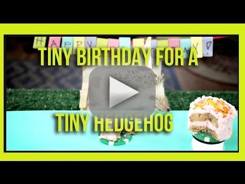 Tiny Animal Birthday Party!