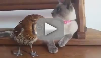 Cat Befriends Owl