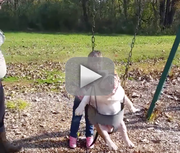 Girl Pushes English Bulldog in a Swing