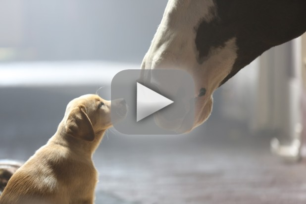 Super Bowl XLVIII Commercials: Best & Worst