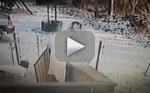 Cat Attacks Woman in Snow