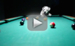 Dog Plays Billiards