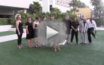 Ring Bearer-ing Dog Ruins Wedding Photos