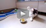 Cat Takes on Lemon: Who Wins?!?