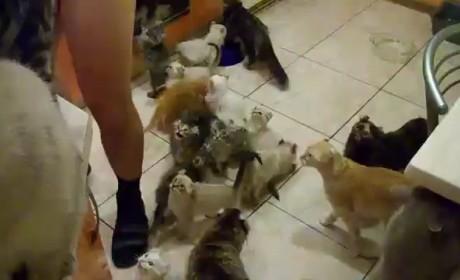 Crazy Cats Await Food