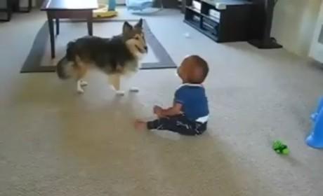 Dog Runs Around, Baby Laughs