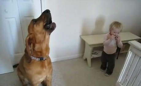 Toddler, Dog Singing