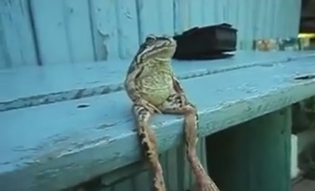 Frog Sits on Bench Like a Person, Reflects on Life