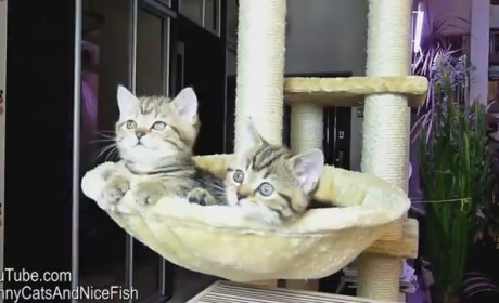 Kittens Watch Tennis, Cause Internet to Collectively Melt