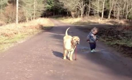 Boy Plays in Puddle, Dog Waits