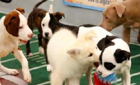 Puppy Bowl IX Preview