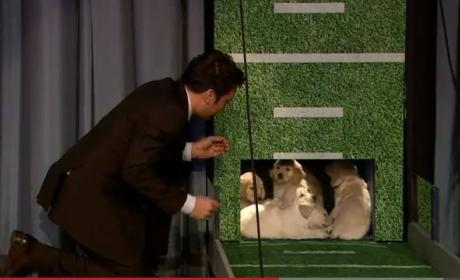 Puppies Predict Super Bowl Champion on Jimmy Fallon