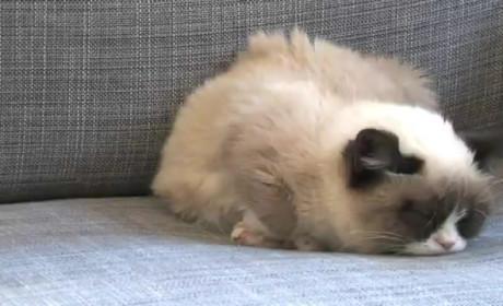 Grumpy Cat Harlem Shake Video
