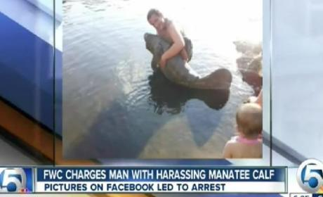 Man Charged After Hugging Manatee