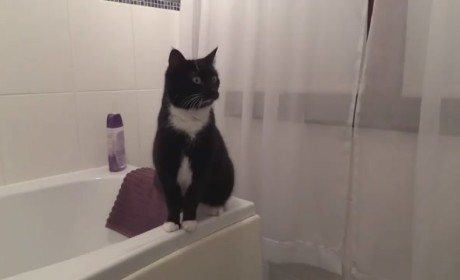 Narcissist Cat Checks Self Out in Mirror, Looks Sharp as Hell