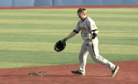 Squirrel Darts Onto Baseball Field, Starts Running the Bases