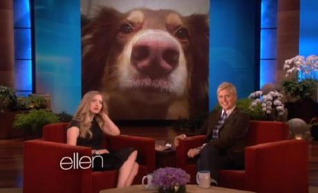 Amanda Seyfried Loves Her Dog