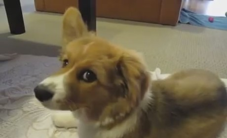 Puppy Has Hiccups