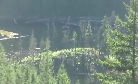 Bigfoot Sightings in Canada: Real or Fake?