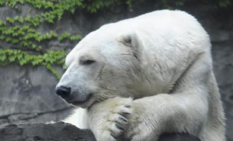 Gus the Polar Bear Passes Away