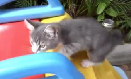 Kittens on Slides: Because it Had to Happen