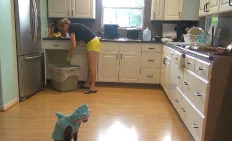 Cat Wears Shark Costume, Rides Around on Roomba