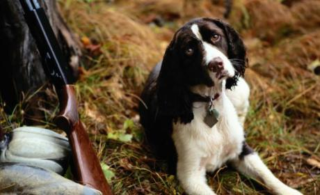 Dog Shoots Owner with Shotgun in Minnesota