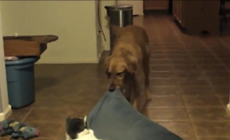 Cat Compilation: Stealing Dog Beds, Acting Like Jerks