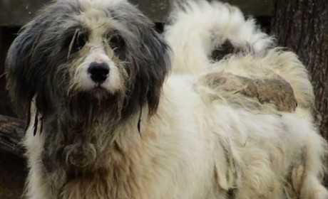 Abandoned Dog Gets Rescued, Gets a Haircut, Gets a Fresh Start