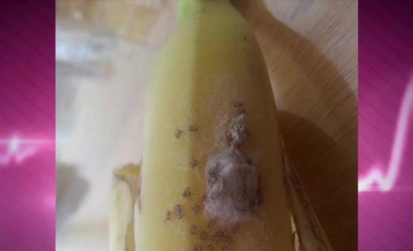 Spiders in Banana