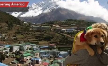 Dog Climbs Everest